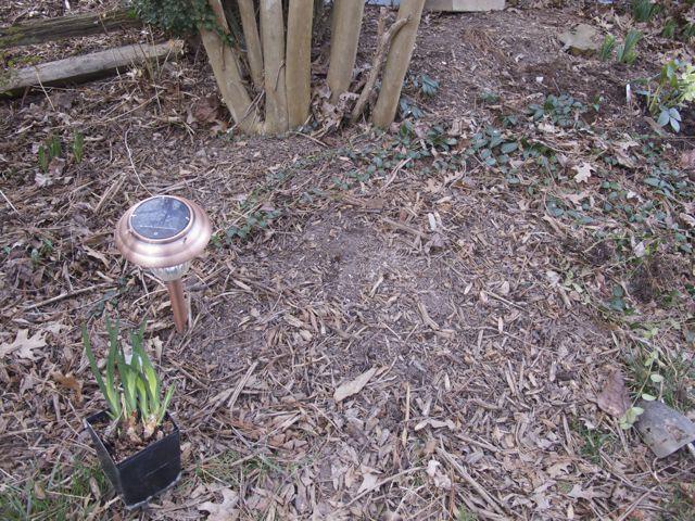 a-perfect-planting-spot