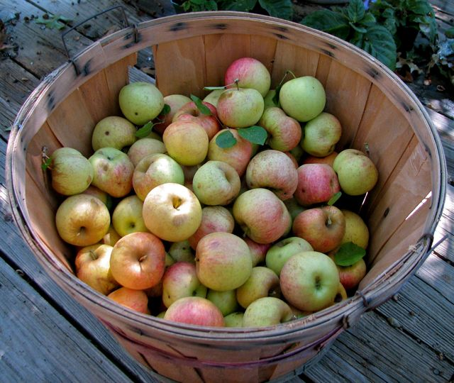 apple-basket