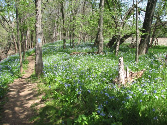 bluebell-trail