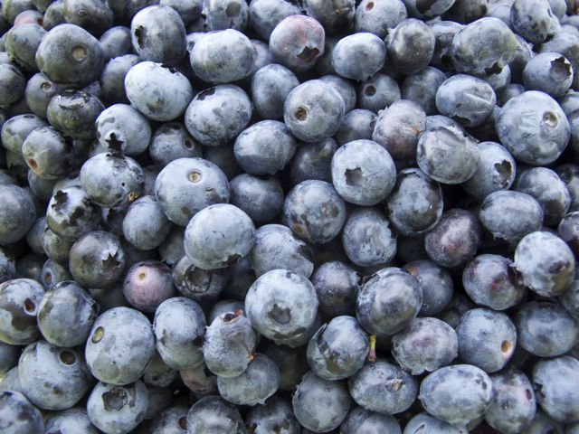 blueberries-en-masse