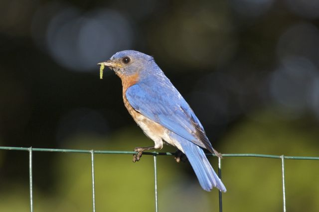 bluebird-and-breakfast