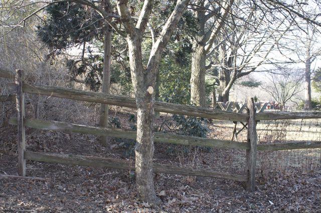 crabapple-pruning