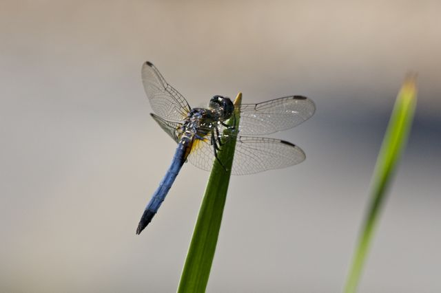 dragonfly-at-long-hill