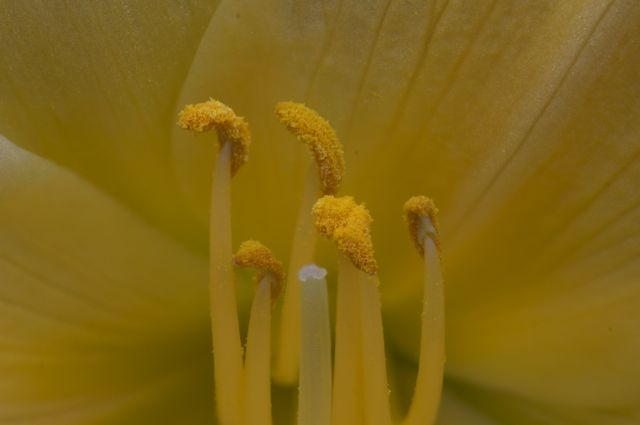 focus-result-b-8-4-daylilly