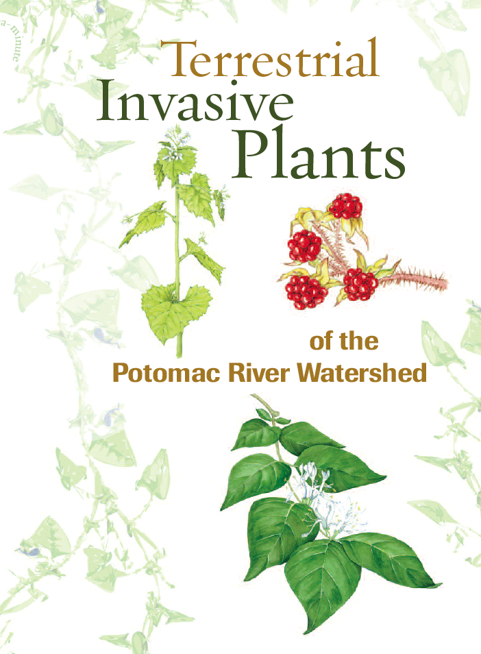 invasive-plants-of-potomac