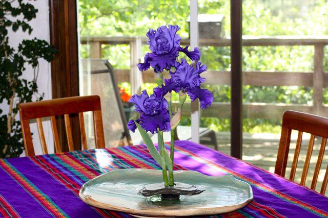 iris-display