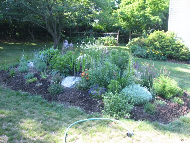 mid-june-for-front-perennial-bed_0