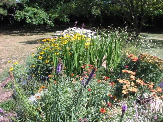 mid-summer-front-perennial-bed