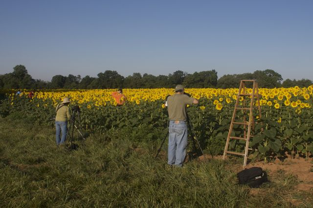 photographers-in-the-sunflower-field