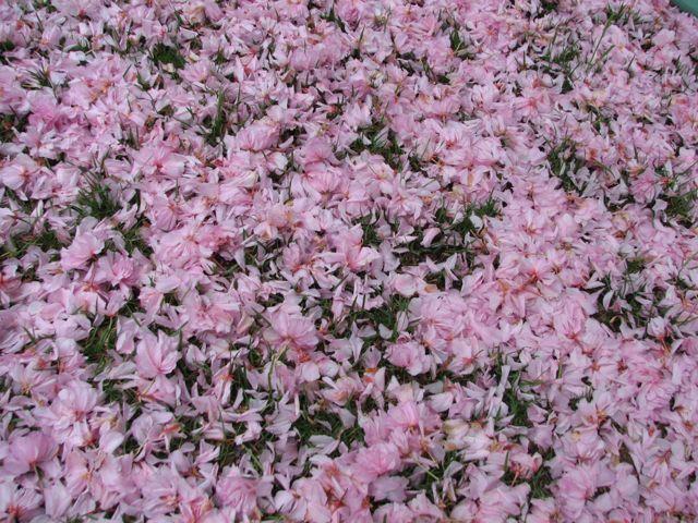 pink-snow