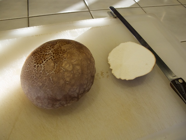 puffball-with-bottom-cut-off