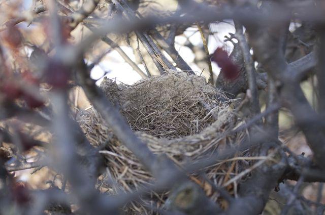 robins-nest_0