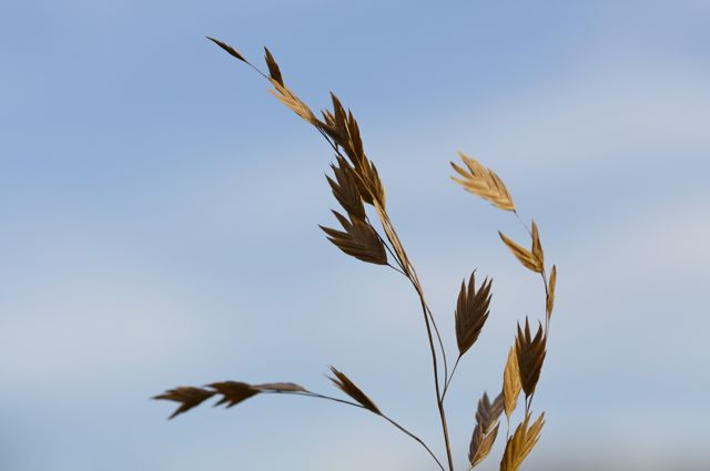 sea-oats-against-the-sky