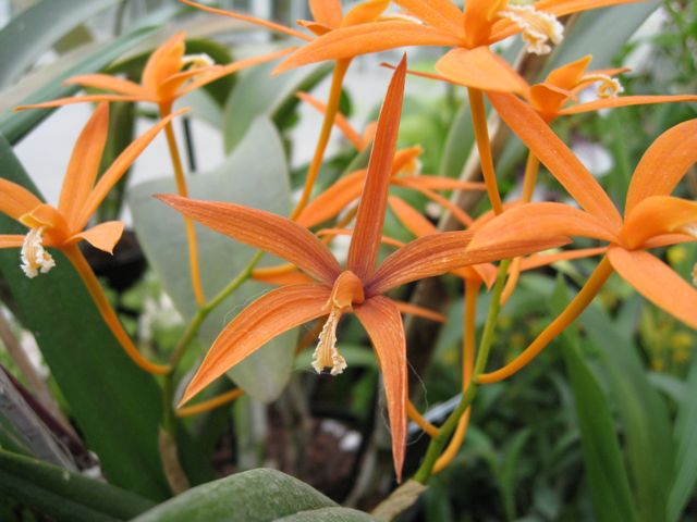 wisley-orchids-1