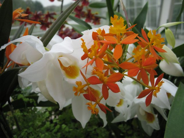 wisley-orchids-2_0