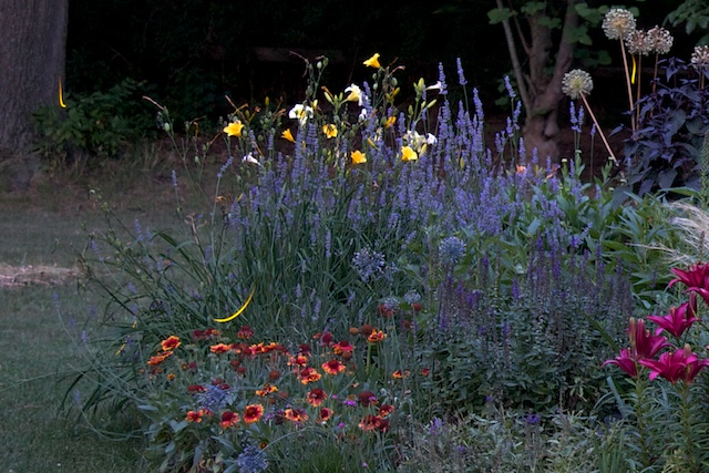 Fireflies In Rock Garden