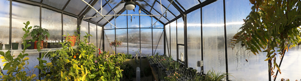 Greenhouse on the coldest days