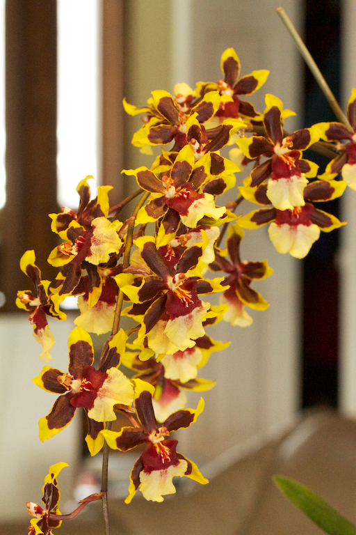 Orchid bower