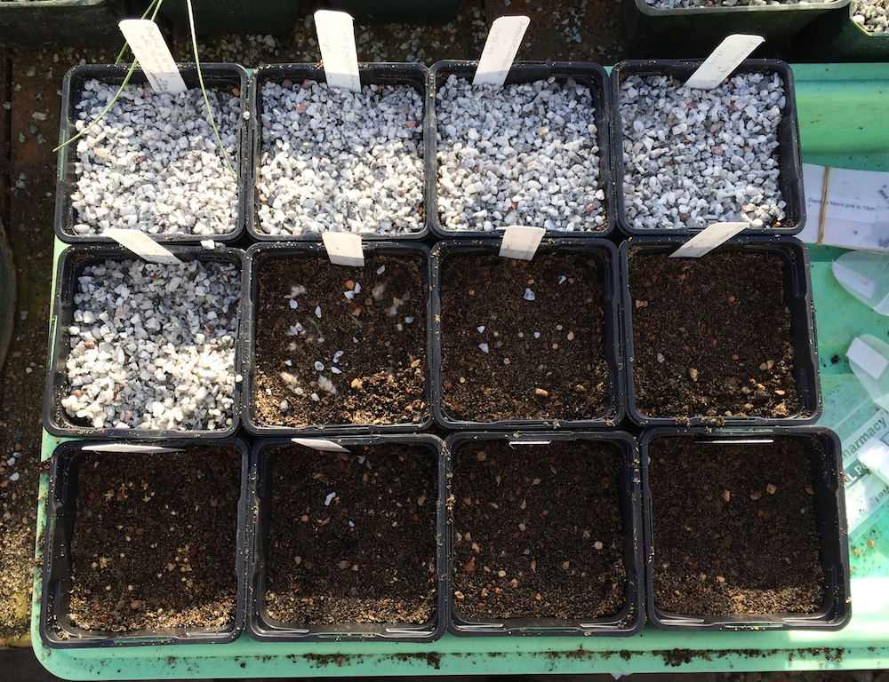 Planting from seed exchanges