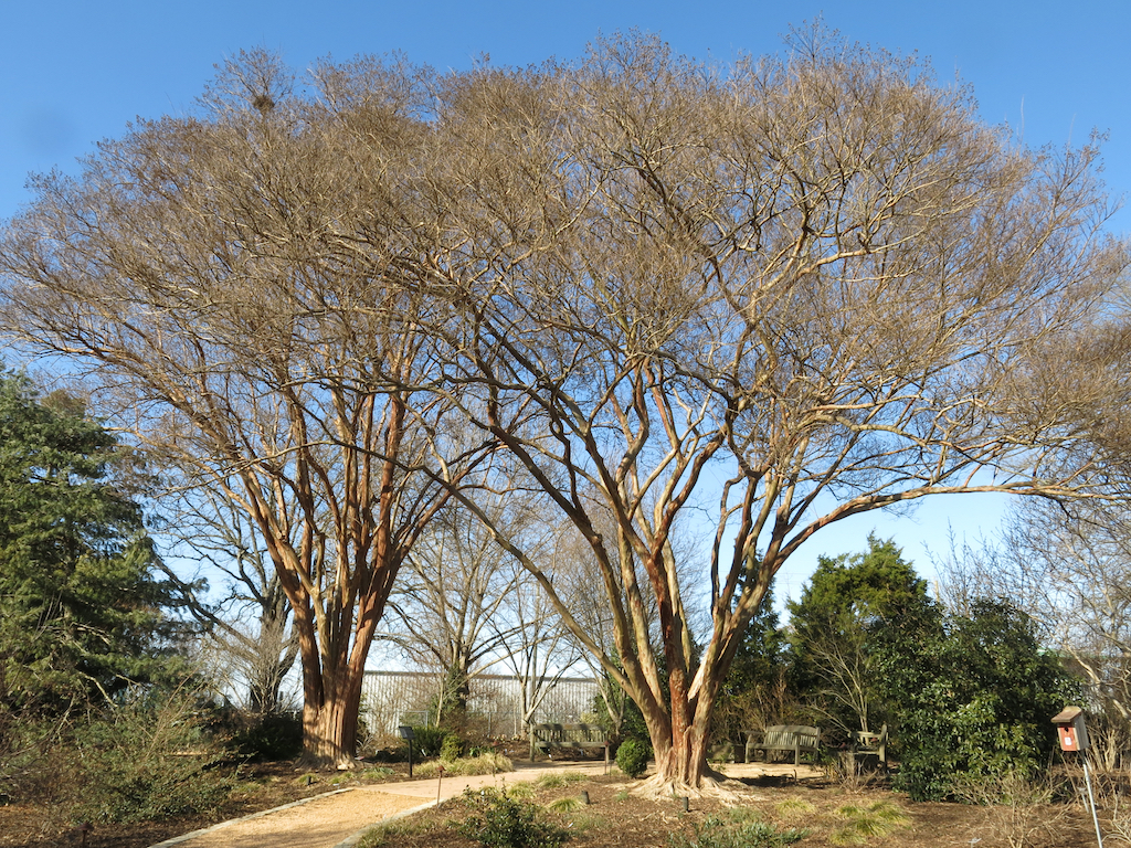 Crepe Myrtles define the entrance