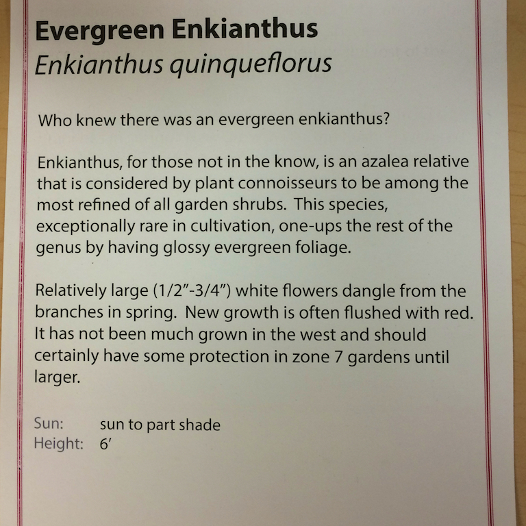Einkianthus description