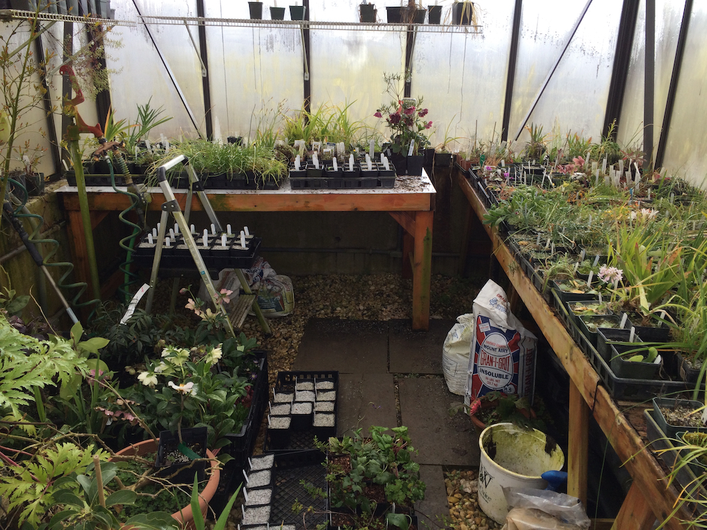 Greenhouse mid-March 2015