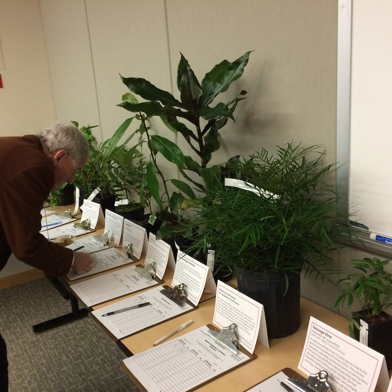 Plant auction