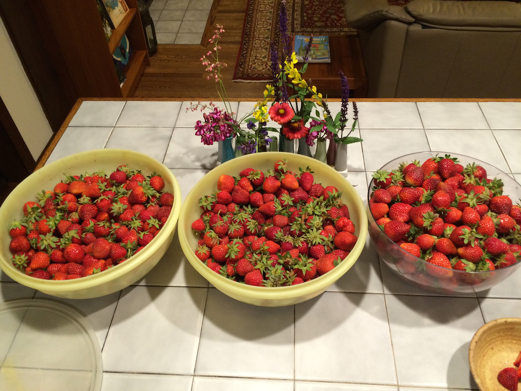 3 nights of strawberry picking