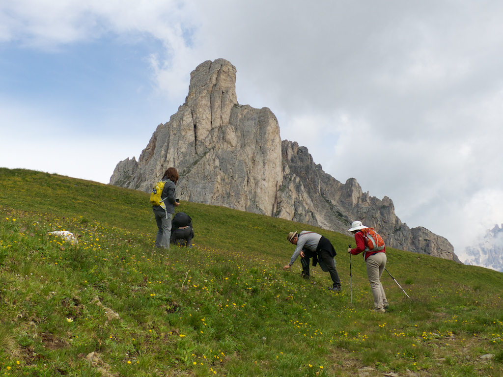 Botanizing in the Dolomites