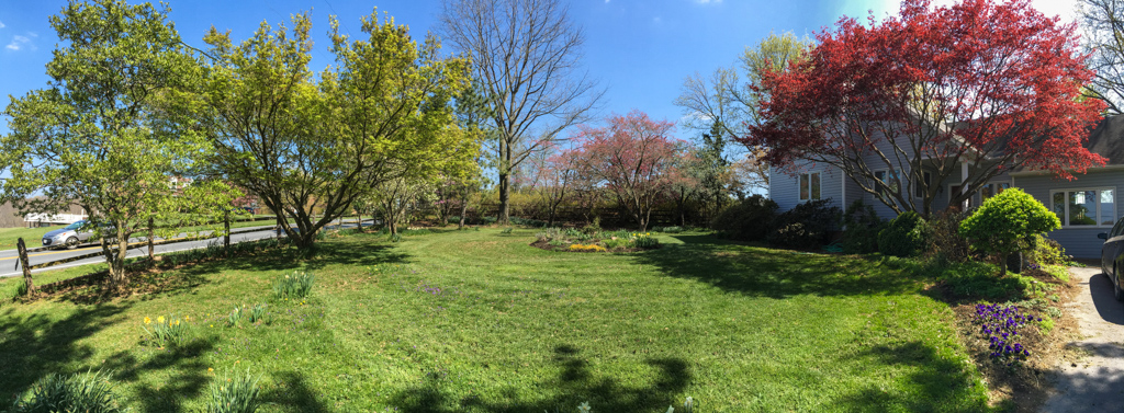 Panorama of Front Yard