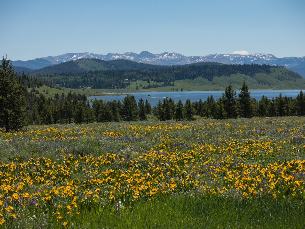Steamboat Lake and Mule's Ears (Wyethia mollis)
