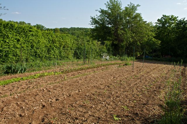 newly-planted-vegetable-garden_0